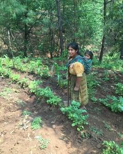 hard work.Harvesting potatoes...Halle Sullivan